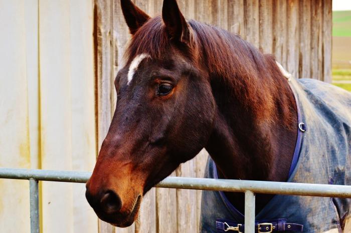 horse-1006557_1920.jpg